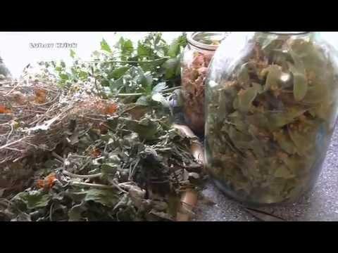 Лекарственные растения (травы), фото, применение, описание