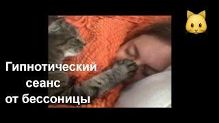 Спящий Кот Баюн. Как быстро заснуть? Смешные кошки и коты