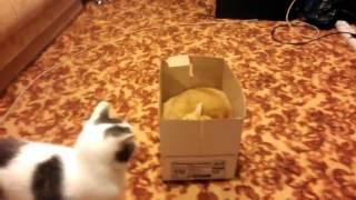 Ожесточенная борьба за коробку
