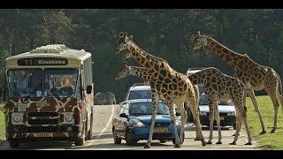 Beekse bergen Bus   safari full-ride safari