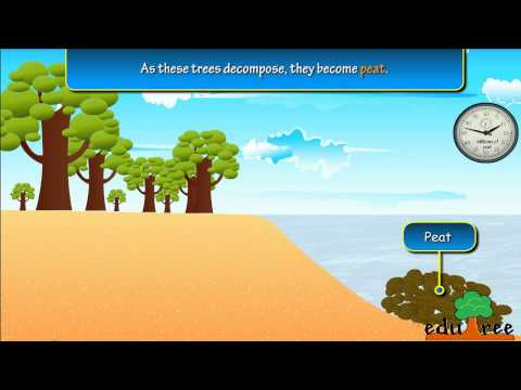 Coal formation   by edutree HD