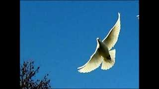 Repeat youtube video KABOOTER NUSKHAY  SPECIAL PUNJABI DR.ASHRAF SAHIBZADA .wmv