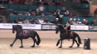 Friesian Spectacular -- Clay Mailer -- Night of the Horse 2014
