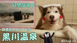 哈Dog Life  熊本熊