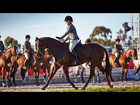 Champion Show Hunter Galloway - 2017 Royal Melbourne Show Horses in Action