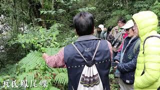 Atayal原鄉 古圳 微旅行