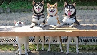 Cute is Not Enough - Funny Cats and Dogs Compilation #173
