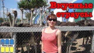 Вкусные страусы. Черный африканский страус. Где посмотреть и купить мясо. Разведение.