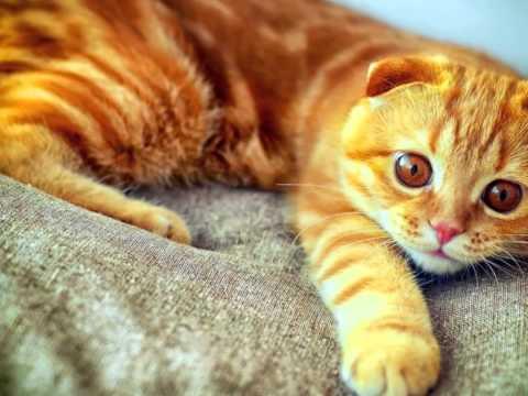 Рыжие коты   Cats