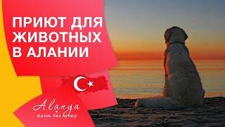 Турция, Аланья. Приют для бездомных животных в Алании. Животные в Турции .
