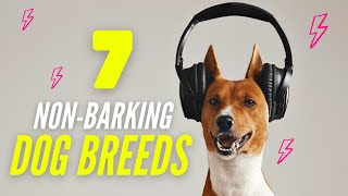 7 Dogs That Don't Bark