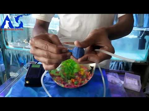How to set up a Fish bowl ( a.s aquarium Fish Shop )