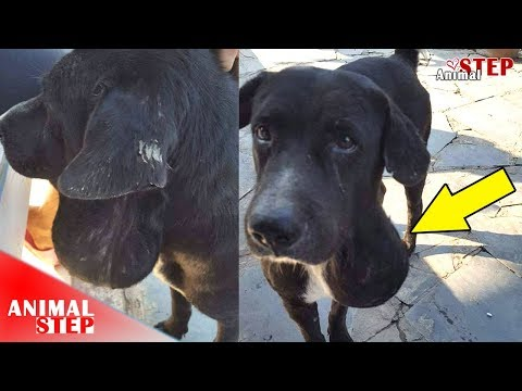 Stray Dog with Salivary Gland Disease Finally Found Love