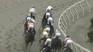 マイネルエクソン の競走馬情報   POG-INFO
