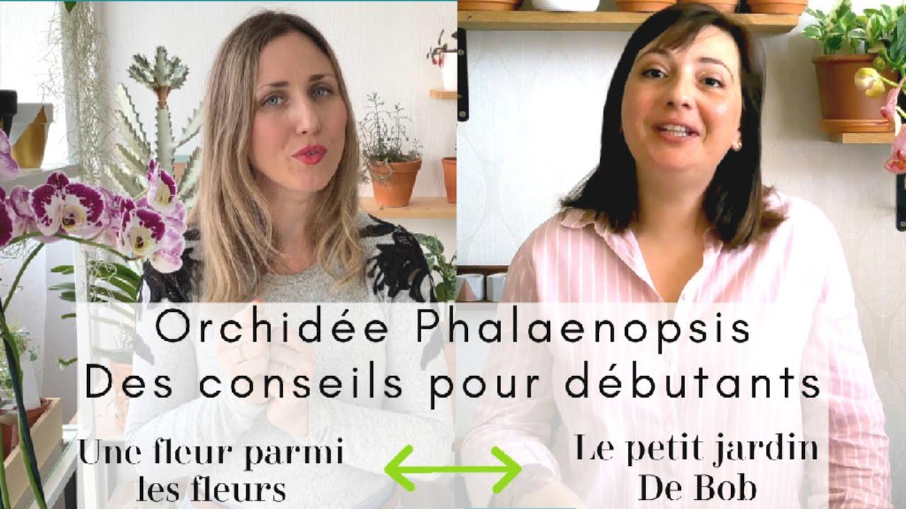 Download Entretien d'une Orchidée Phalaenopsis : Conseils pour débutants   Avec UNE FLEUR PARMI LES FLEURS