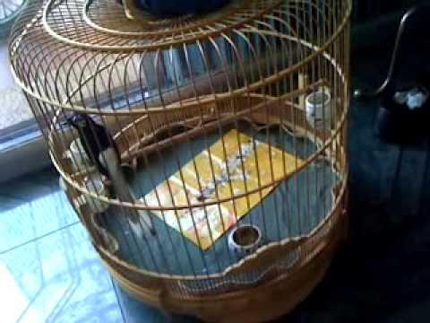 Chich choe lua - bs Nhan.mp4