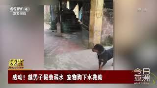 [今日亚洲]速览 感动!越男子假装溺水 宠物狗下水救助| CCTV中文国际