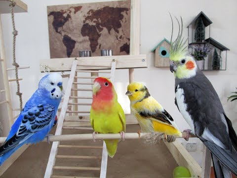 Farklı Kuş Türleri Bir Arada Yaşayabilir Mi