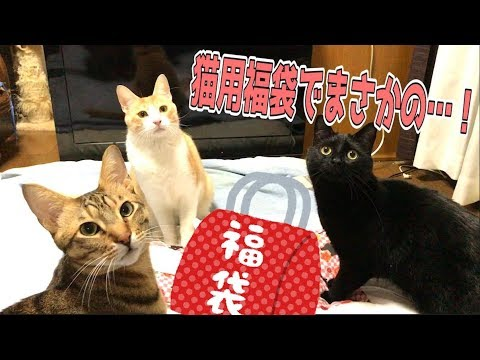 まさかの布団!?猫用福袋5000円分開封してみたら…!