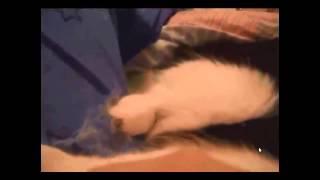очень глупая девочка мучает свою кошку!!!
