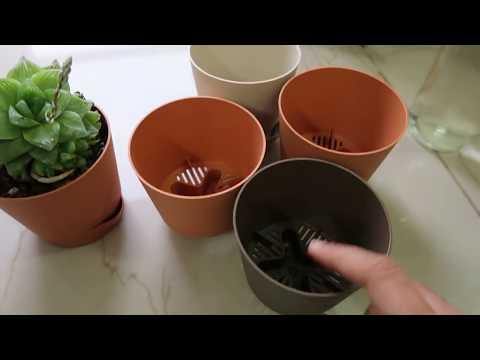 Self Watering Pots Complete Information Youtube