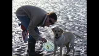 3 Counties Dog Training In Surrey Hampshire And Berkshire