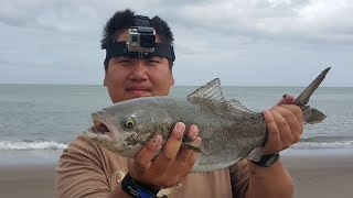 NZ Basic Fishing | Surfcasting | Great day out