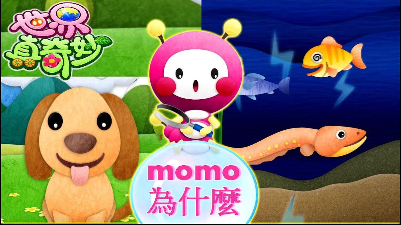 世界真奇妙|【momo為什麼?】為何狗狗會一直吐舌頭?|為何電鰻會放電? - YouTube