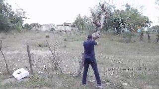 Gustavo Cazando Guineas con su Rifle Cometa LYNX Cal. 25  en Hato Mayor.