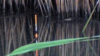 ЛОВЛЯ КАРПА В КАМЫШЕ КАРП НА ПОПЛАВОК рыбалка на боковой кивок
