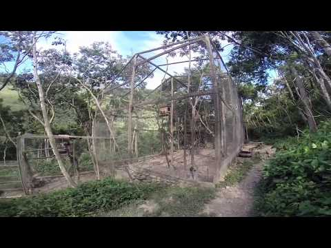 Volunteer Experiences - The Bolivia Wildlife Sanctuary!