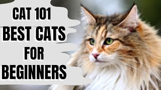 Cats 101 : Best Cats for Beginners