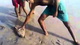fishing in pakistan (Big Carp, Rahu of 2010).MP4