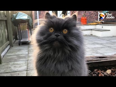 Brave Cat Travels Across The World To Her New Home - BOBBIE | The Dodo