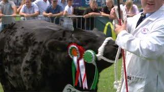 Pencampwriaeth Biff Masnachol | Commercial Beef Championship