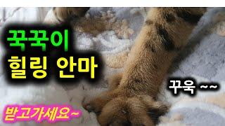 미요범meowbom201121 꾹꾹이초근접촬영 Kukk…