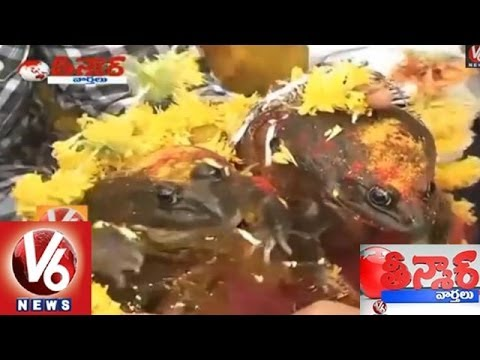 No Belief On Weather Report, Frogs Marriage For Rains In Nagpur - Teenmaar News