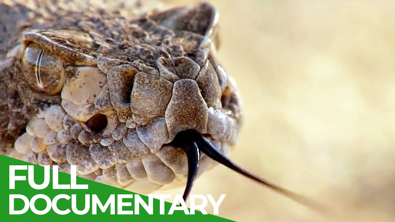 The Most Dangerous Wildlife Moments - Part 1 | Free Documentary Nature