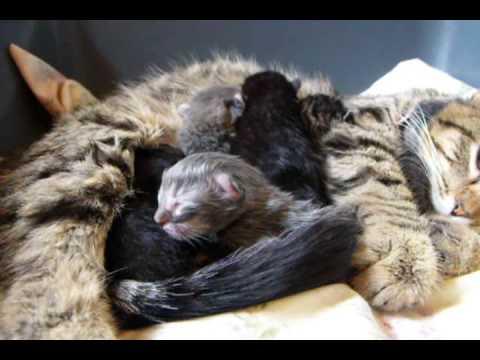 Newborn Kittens~ 0-1 Day Old!