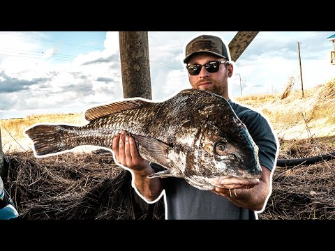 BOWFISHING Redfish And MONSTER Drum In Louisiana Marsh