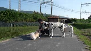 仲良くしてもらっているモンキードッグ団十郎とシロ、2匹ともとても賢...
