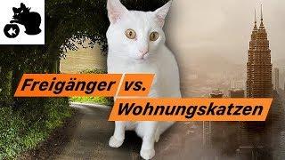 🔥Freigänger Katze vs. Wohnungskatzen / Katzenhaltung Vorteile + Nachteile