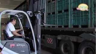 видео: Промышленное выращивание редиса (Израиль)