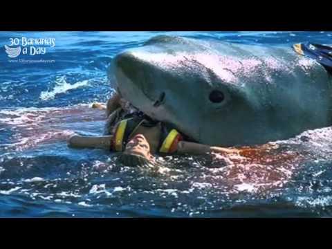 Goblin Shark Gif