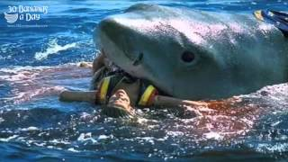 Bikini Model Shark Attack On Australian Beach Reaction