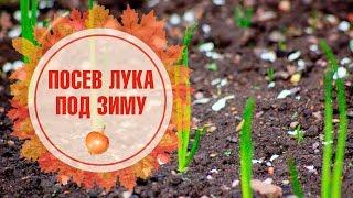 видео Что такое зимний лук