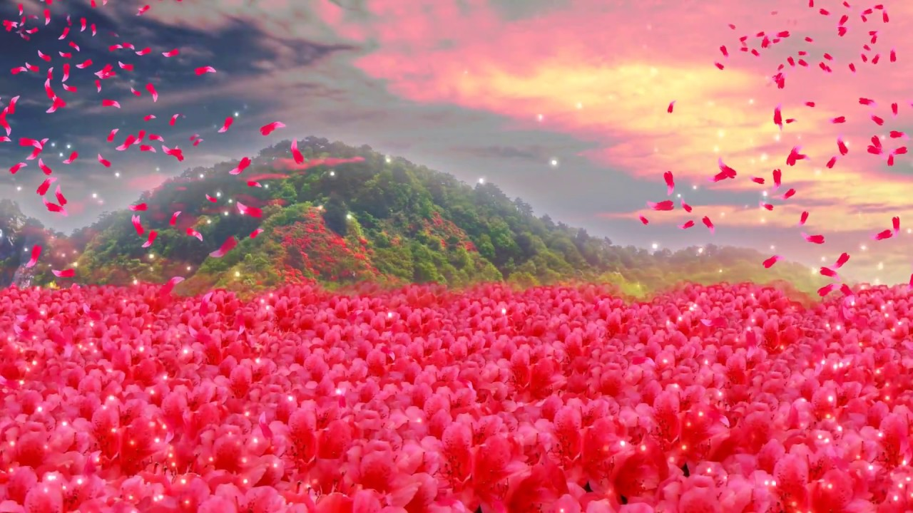 Red flowers stage photography background flowers  video background