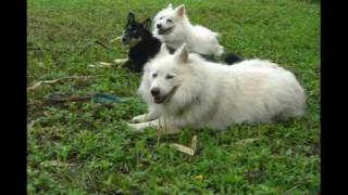 Balanced Obedience Dog Training Of Hawaii Dog Boot Camp & Socialization