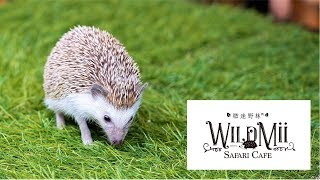 台北特色寵物咖啡館微迷野林Wildmii Safari Cafe (May 5, 2019)