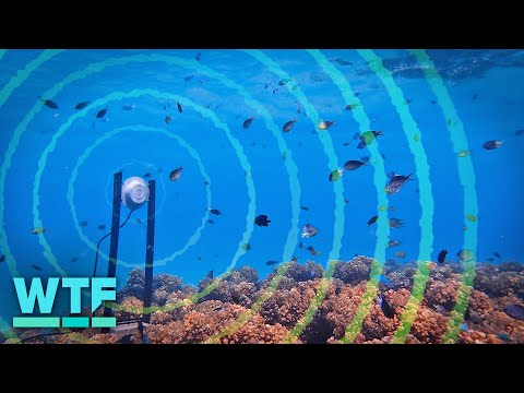 Using Sound To Repopulate Dead Coral Reefs